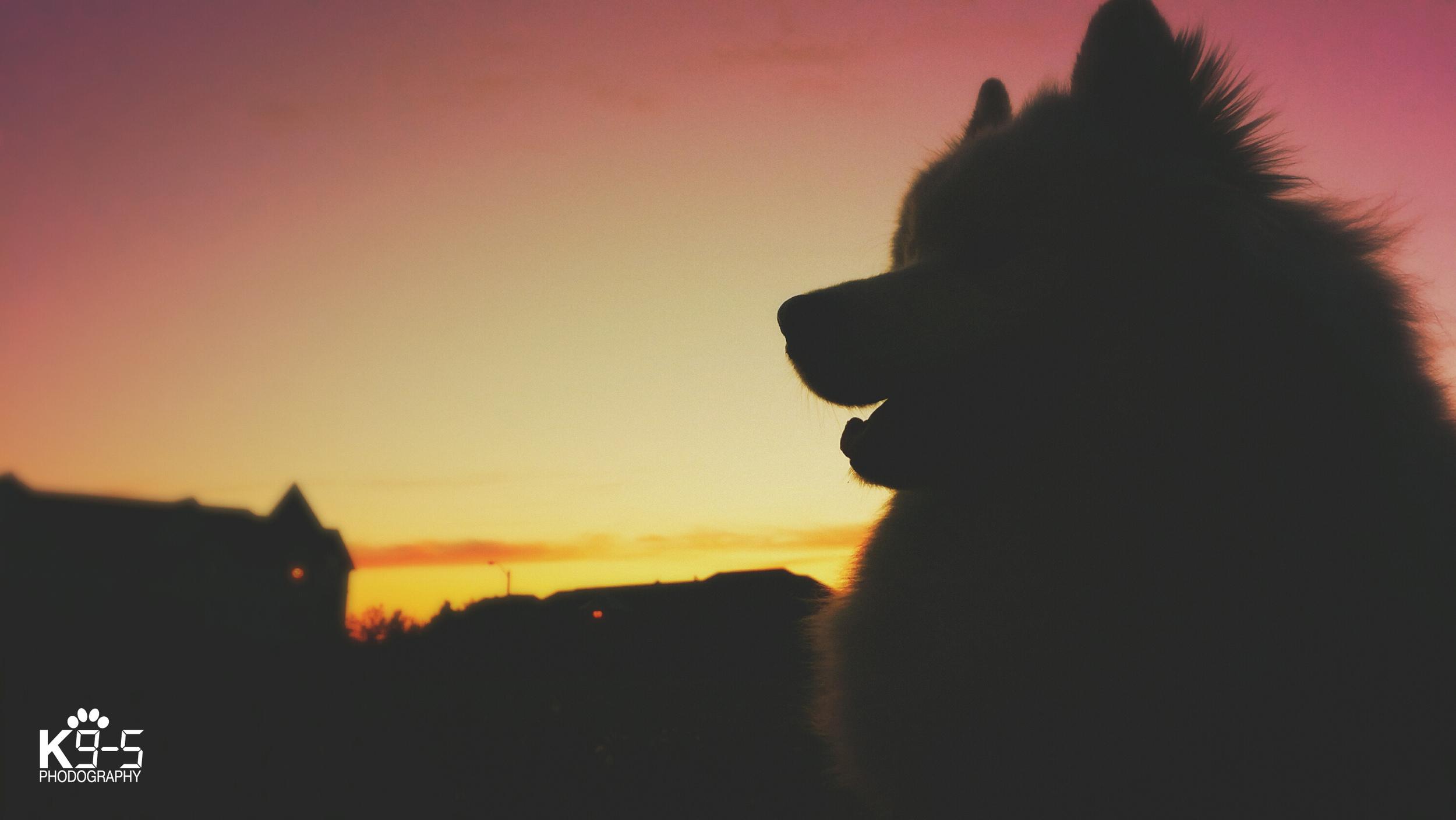 dog92 copy.jpg