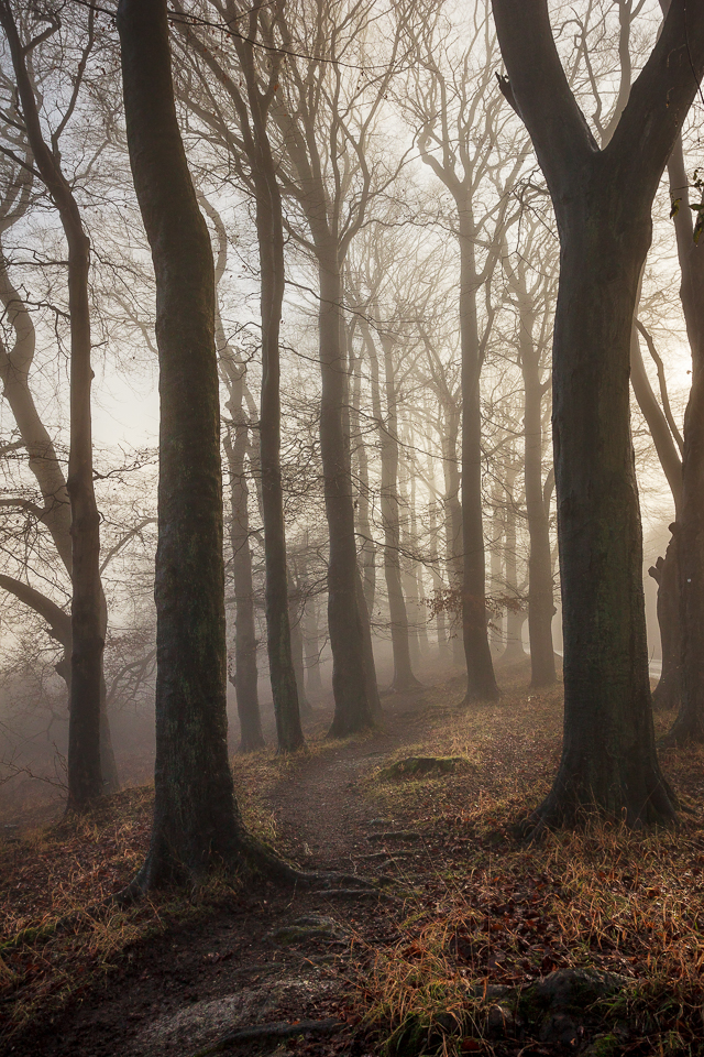 Backlit Woodland