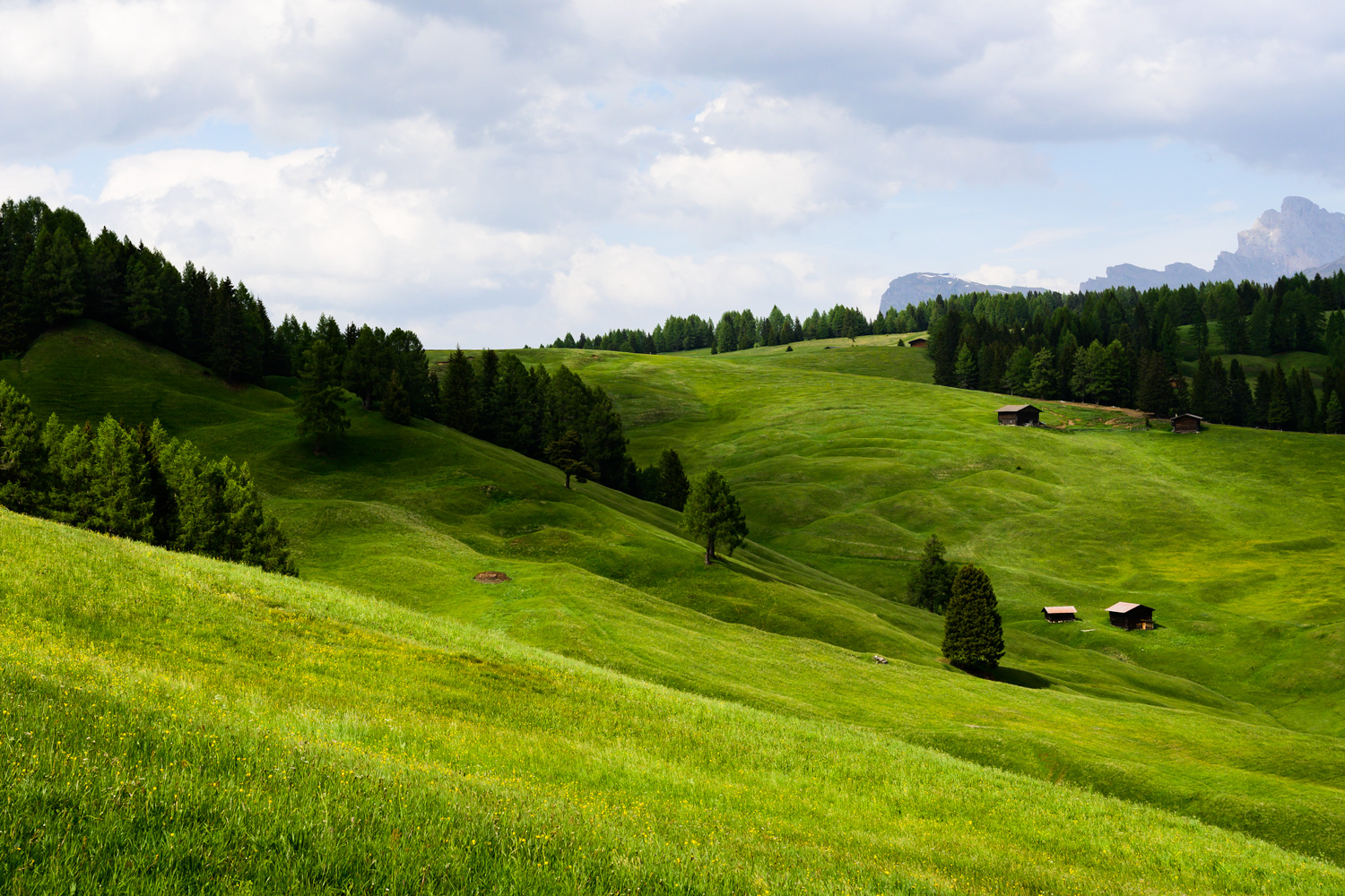 In the Meadows - Alpe di Siusi