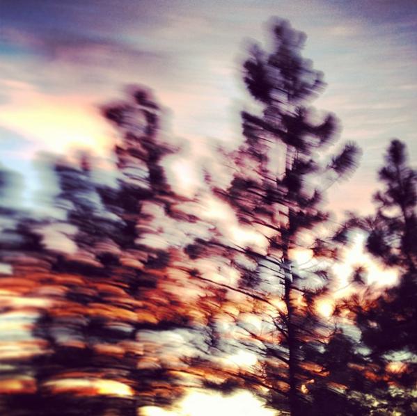 Oregon Pine Driveby