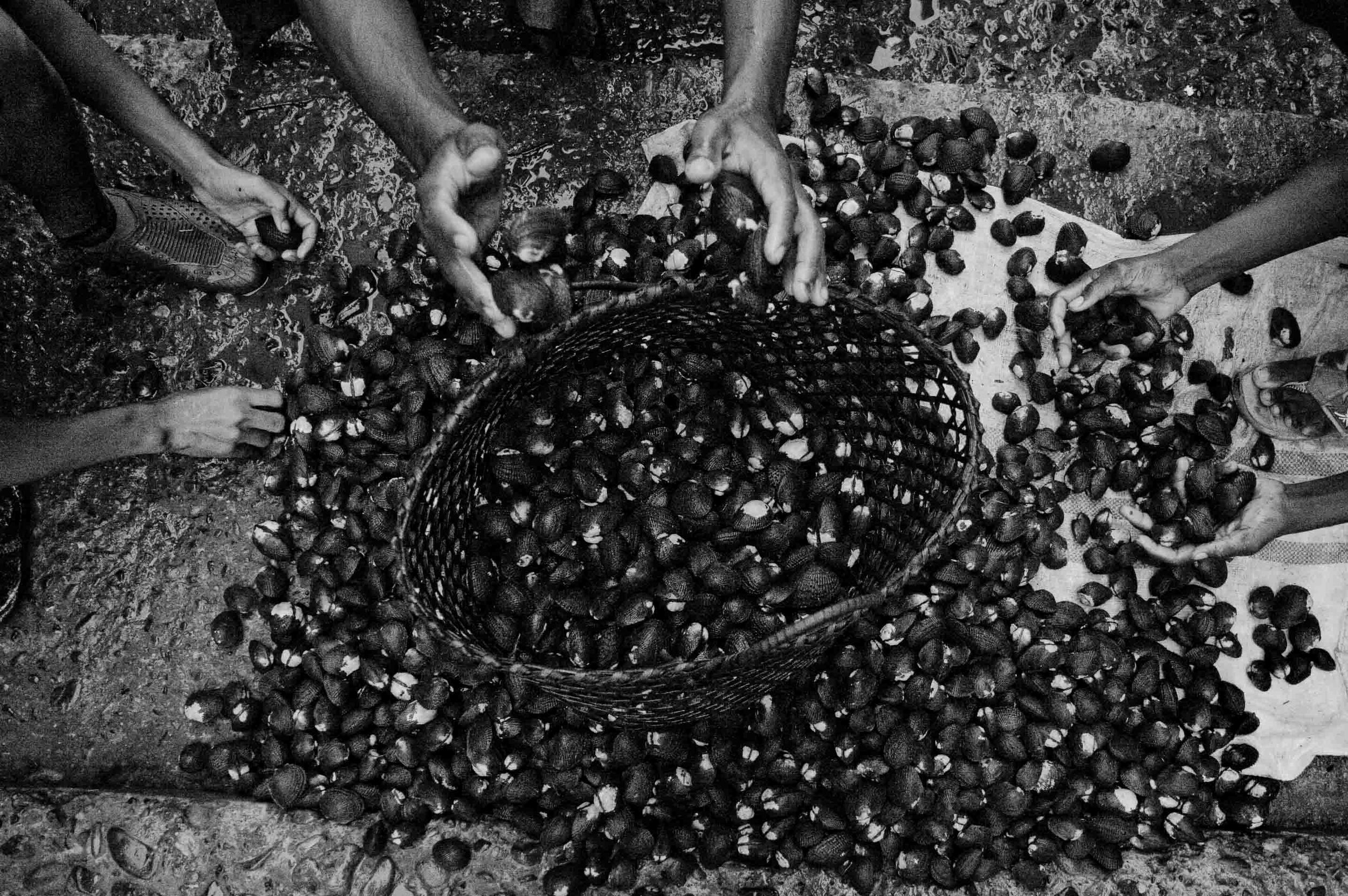 Men gather around a pile of black shells to be sold to middle men in the city of San Lorenzo and then to the rest of the country. San Lorenzo, Ecuador. 2010.
