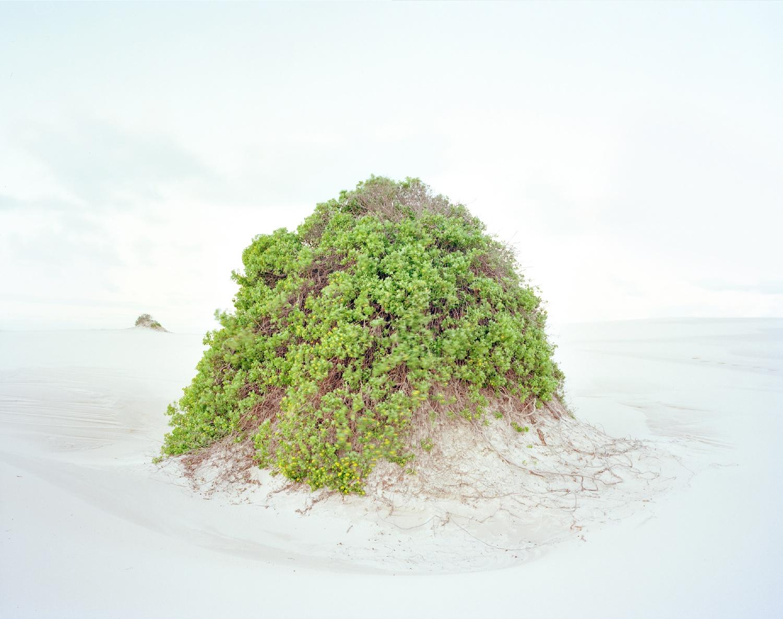 Dune #11, 2012