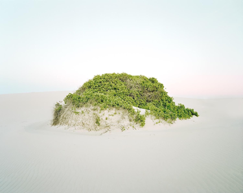 Dune #15, 2012