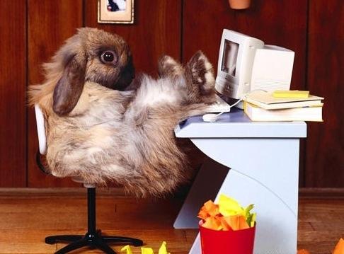 lazy_rabbit.jpg