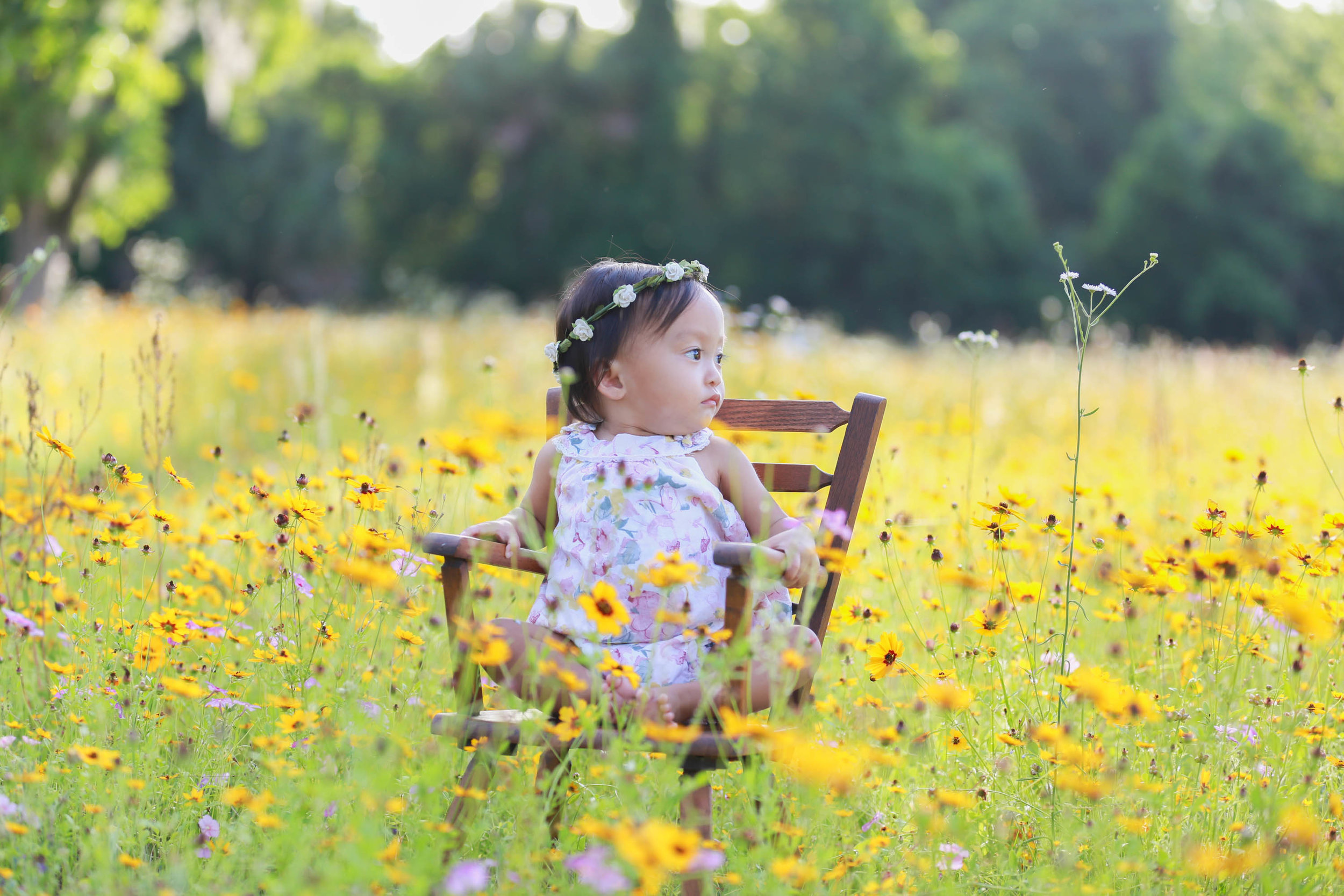 Wildflower Field Photography