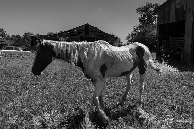 horseJCL2.jpg