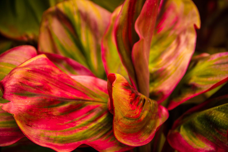 Kauai is alive with astonishing colors