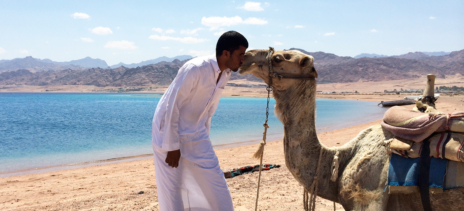 kissing-camel.jpg
