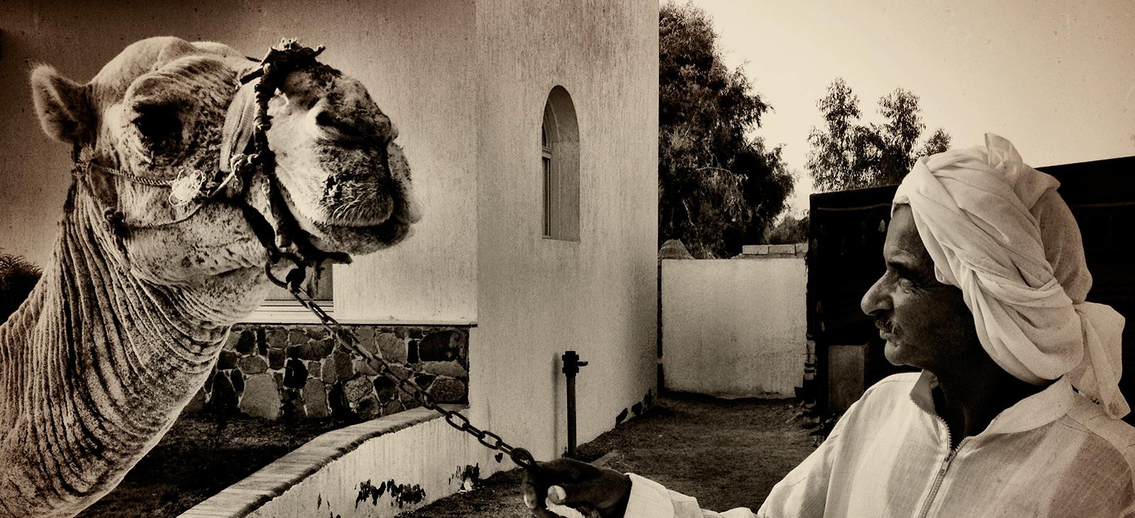 sheikh-ali-camel.jpg