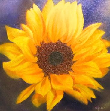 Evening Sunflower