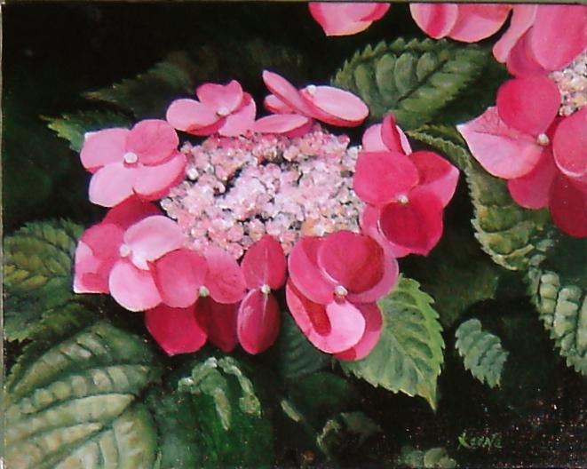 Bob's Pink Hydrangea