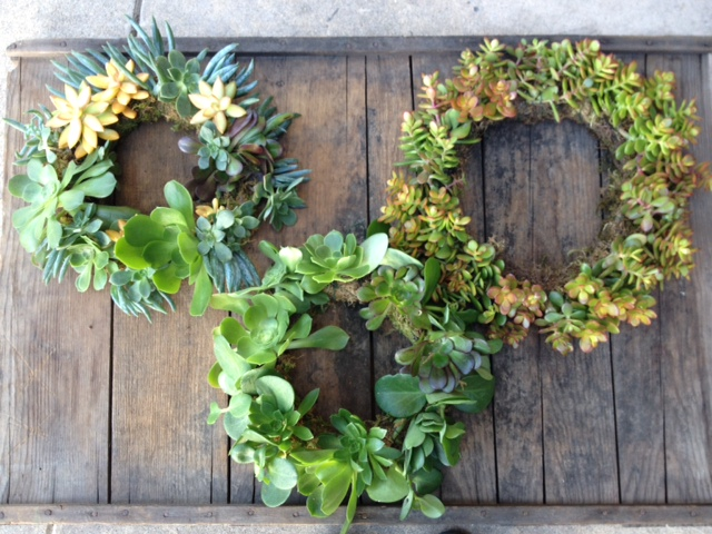 Succulent living wreaths.