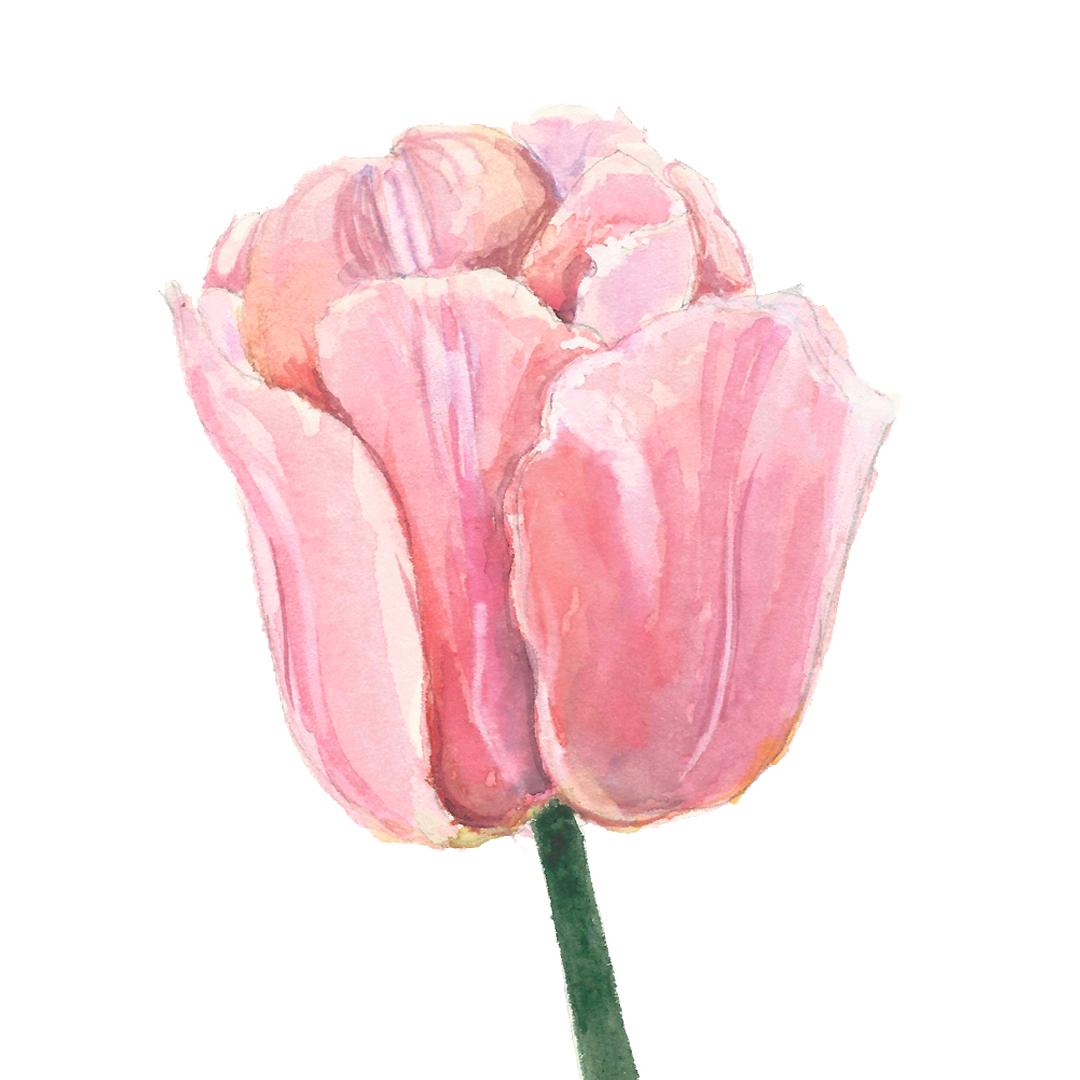 LYC_Illustration_0320_Floral-1.jpg