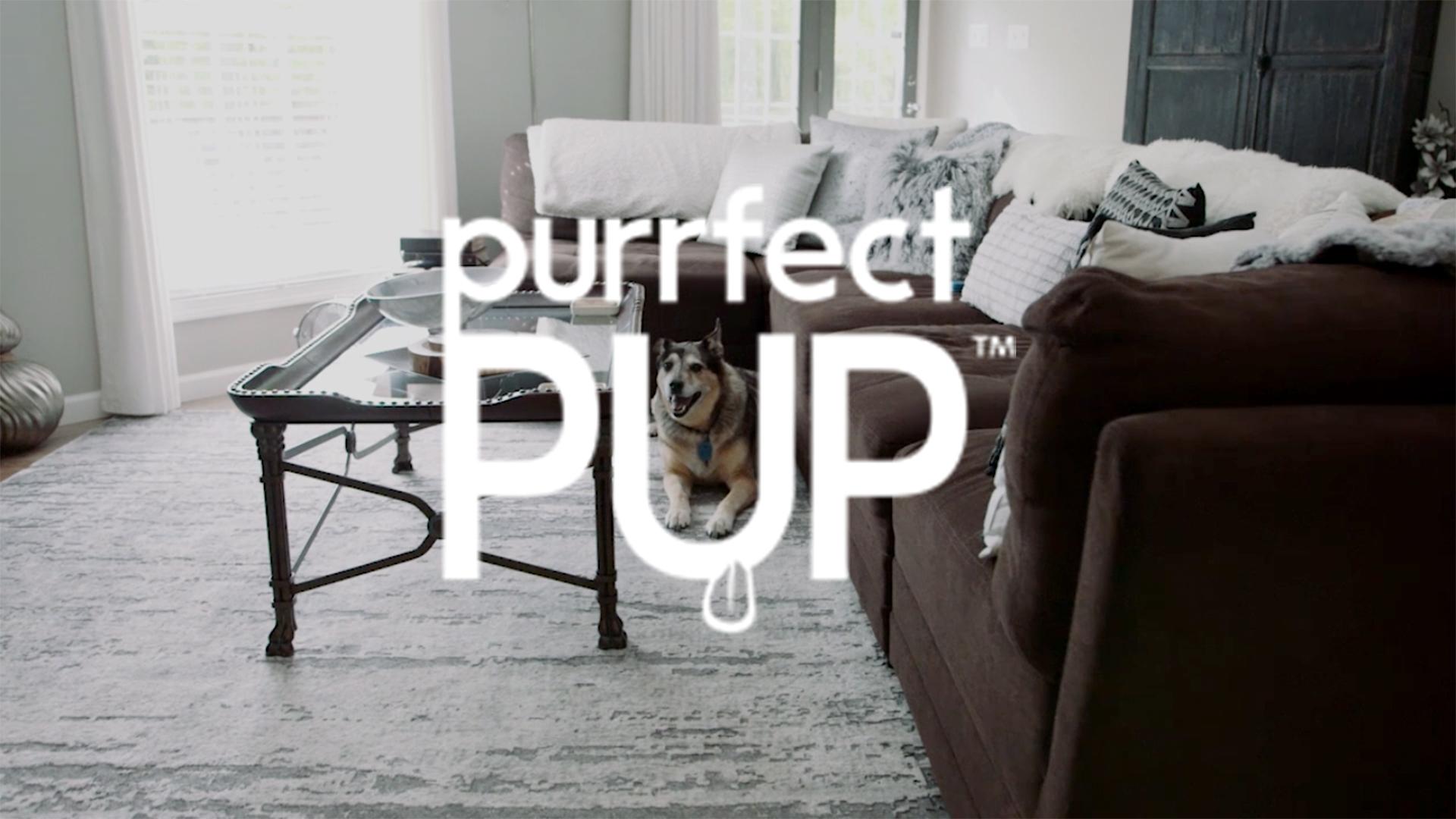 Purrfect Pup thumbnail.jpg
