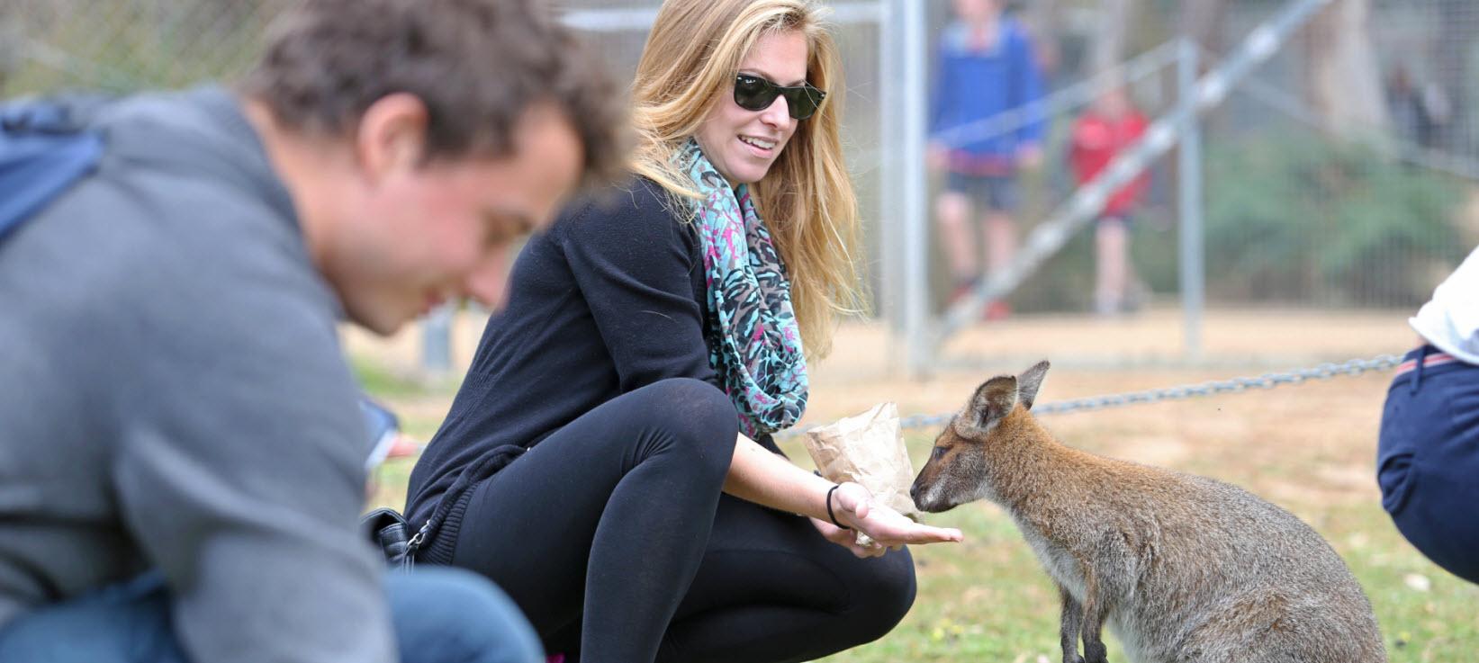 top-10-australian-wildlife-hostels-UniBRIDGE.jpg