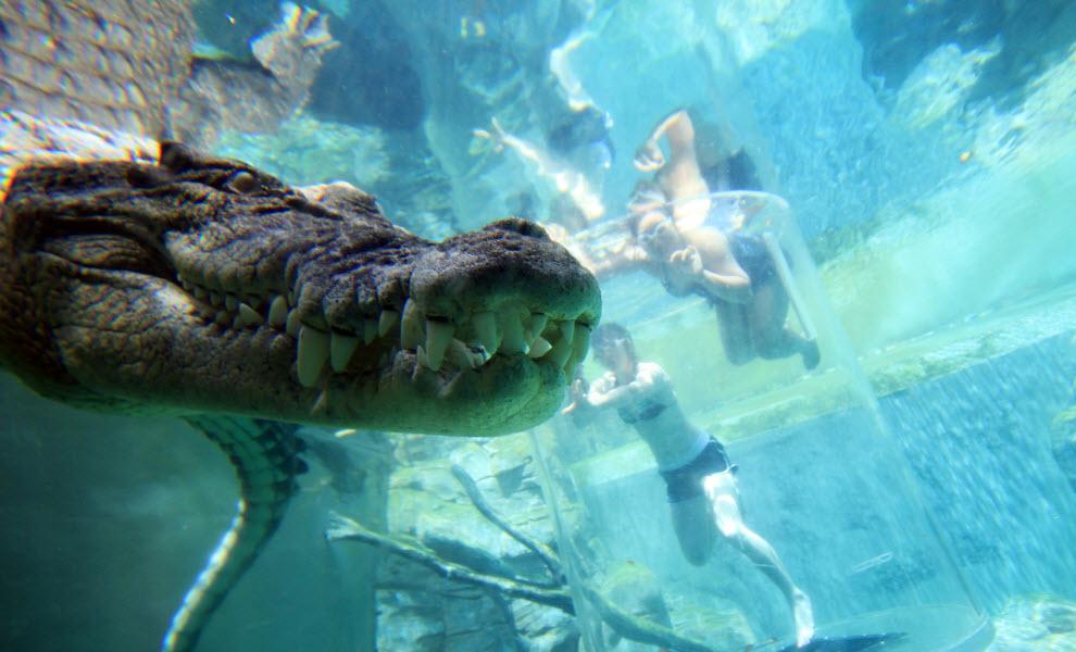 animal-encounters-croc-credit-crocosaurus-cove-UniBRIDGE.jpg