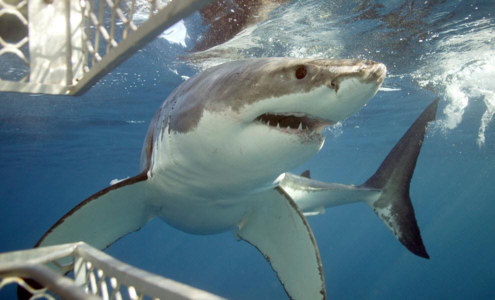 animal-encounters-shark-credit-calypso-star-charters.jpg