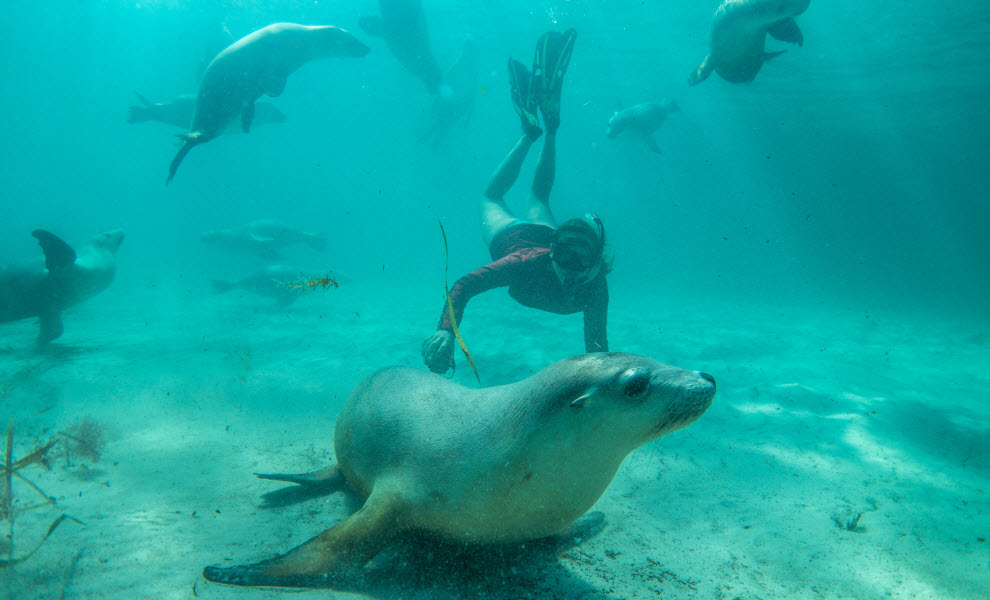 animal-encounters-sea-lion-credit-greg-snell_ta.jpg