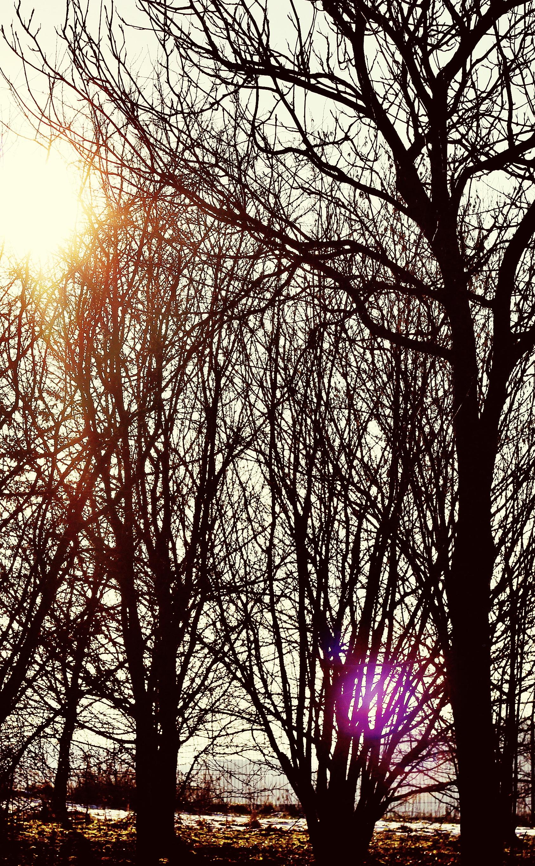 Branch sunlight.jpeg