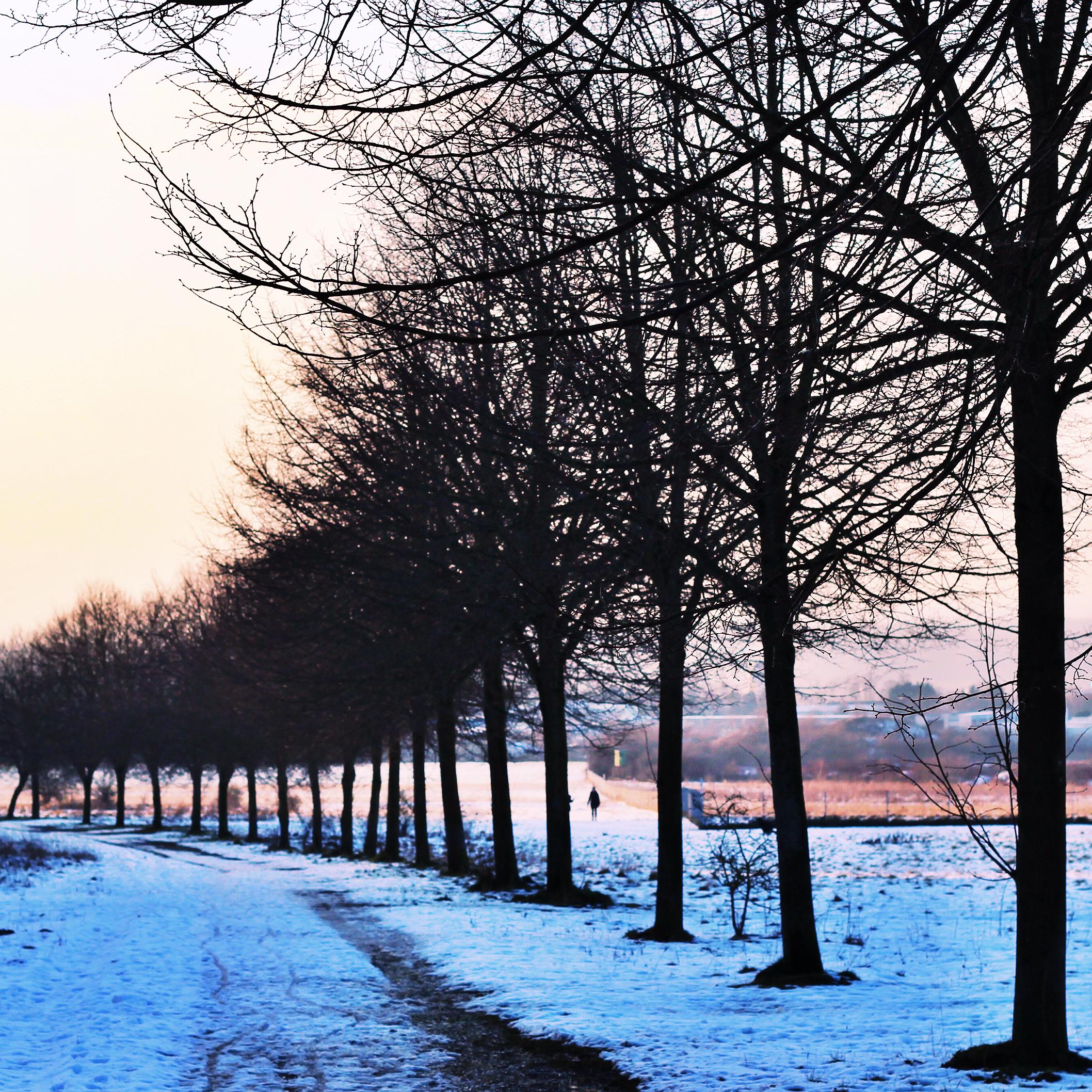 Curved tree path.jpeg