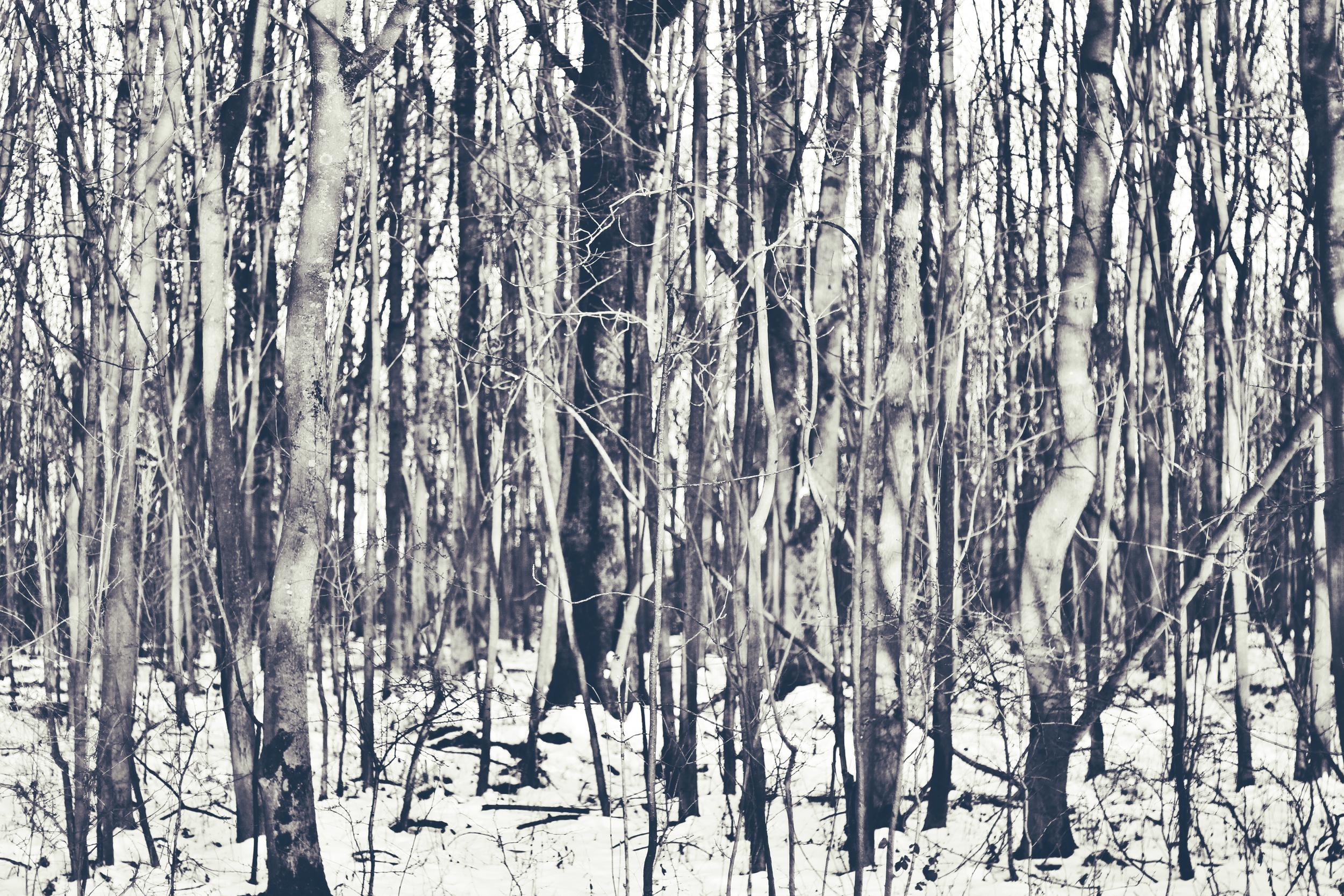 Forest close up.jpeg