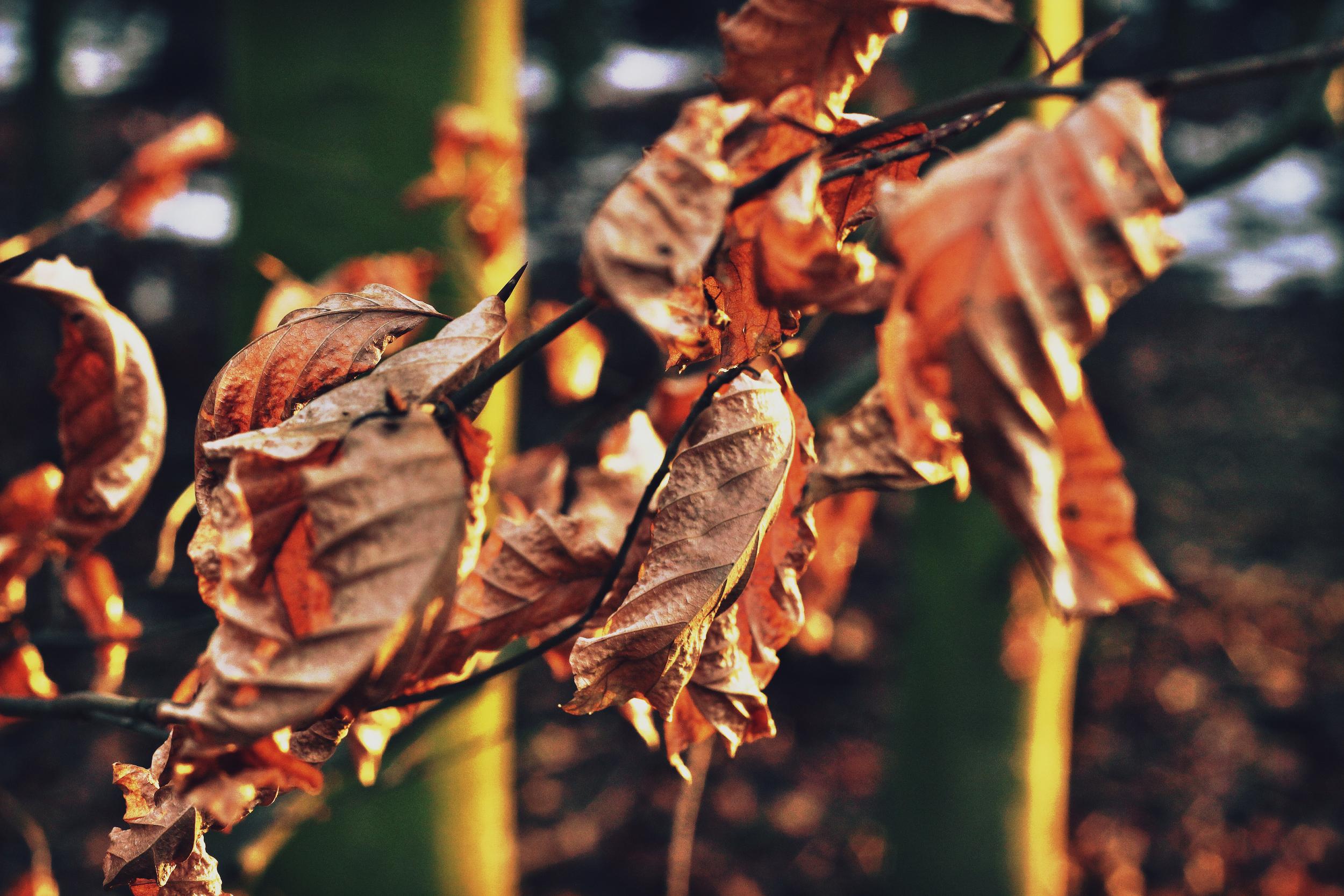 Multi leaves.jpeg