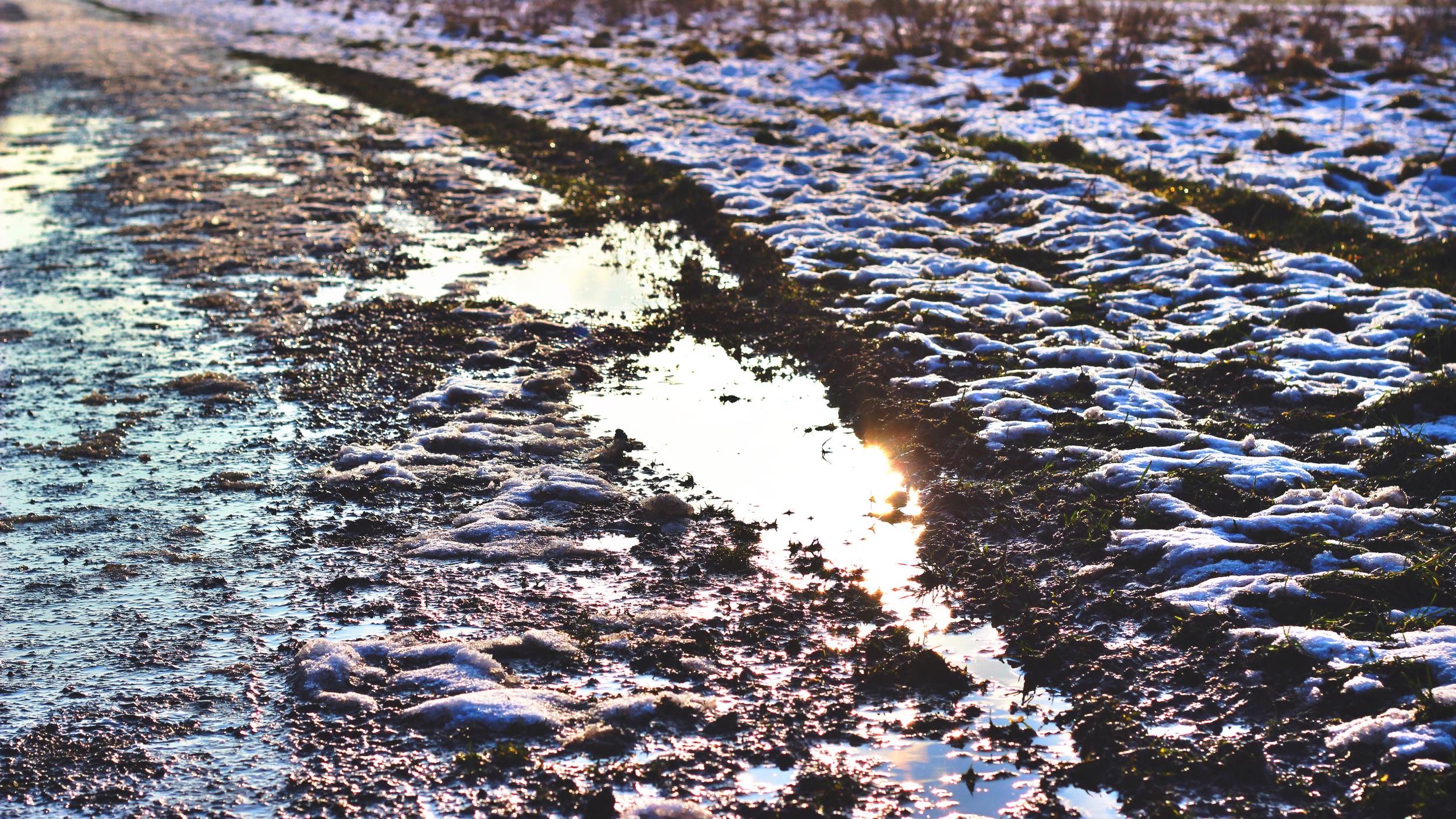 Path puddle.jpeg