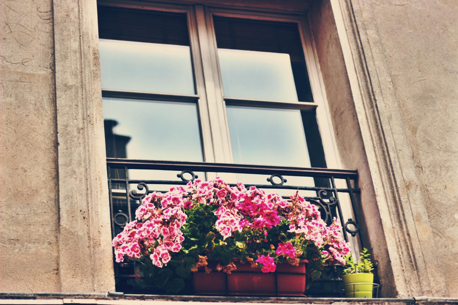 Geranium balcony.jpeg