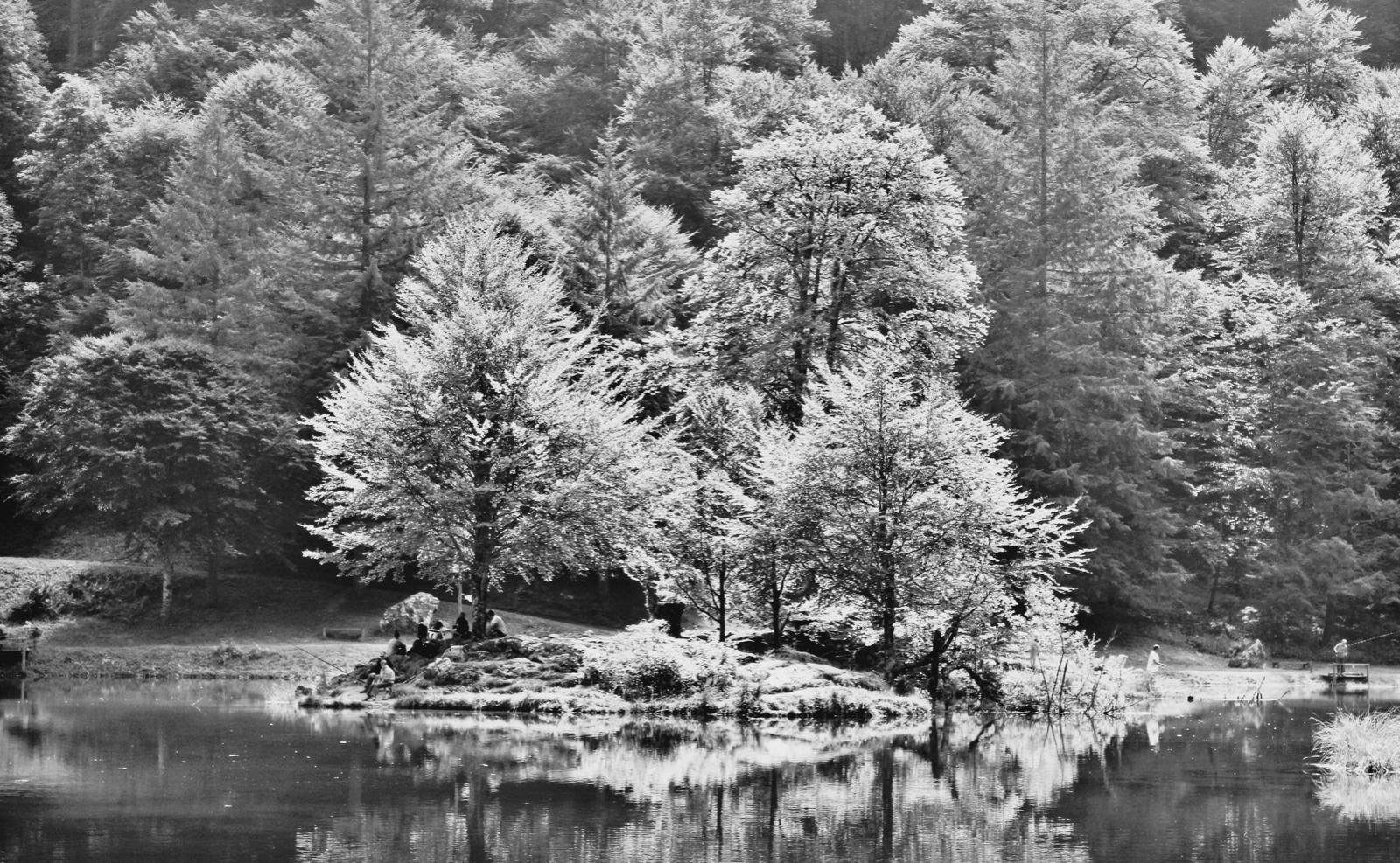 Black and white trees.jpeg
