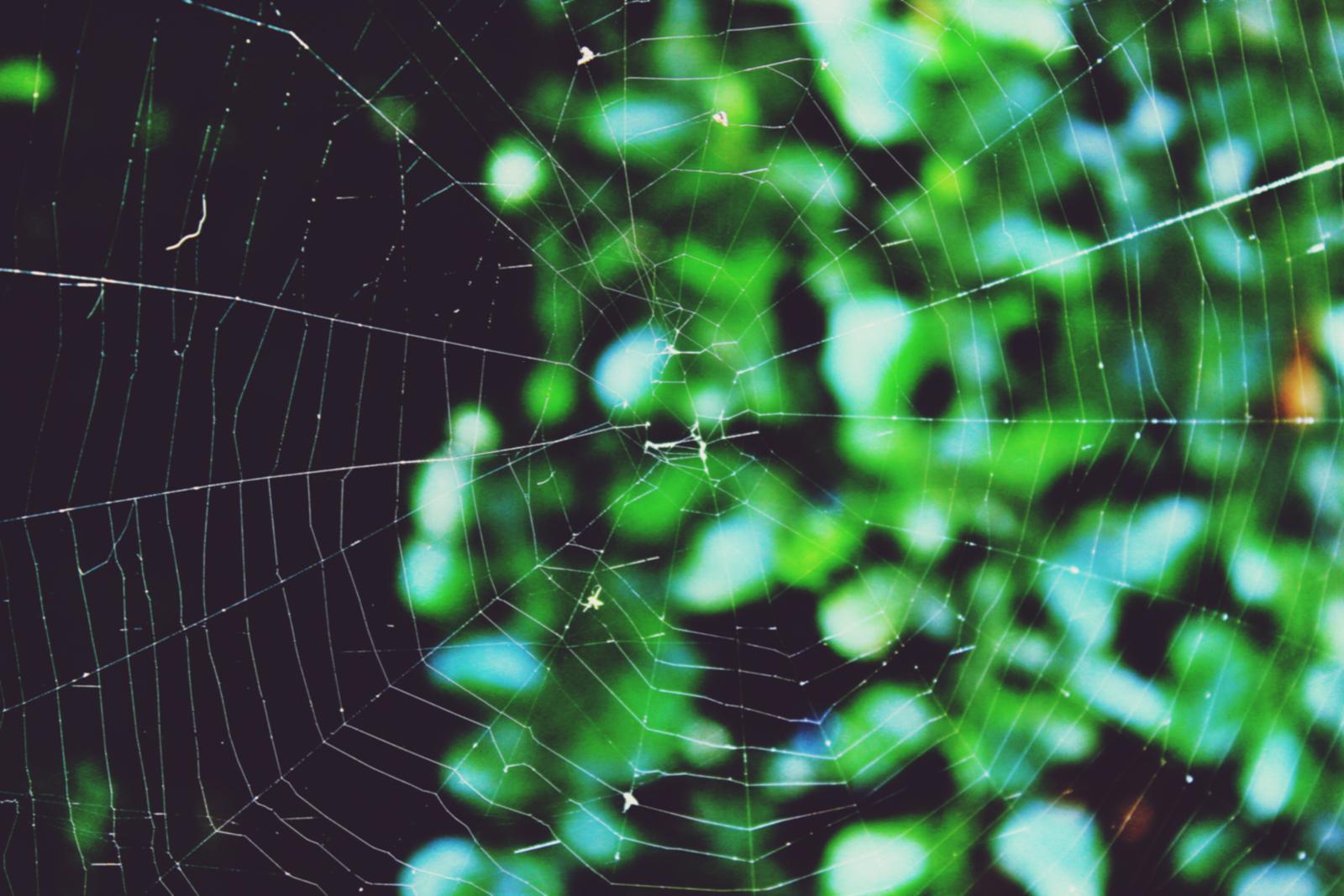 Spiderweb.jpeg