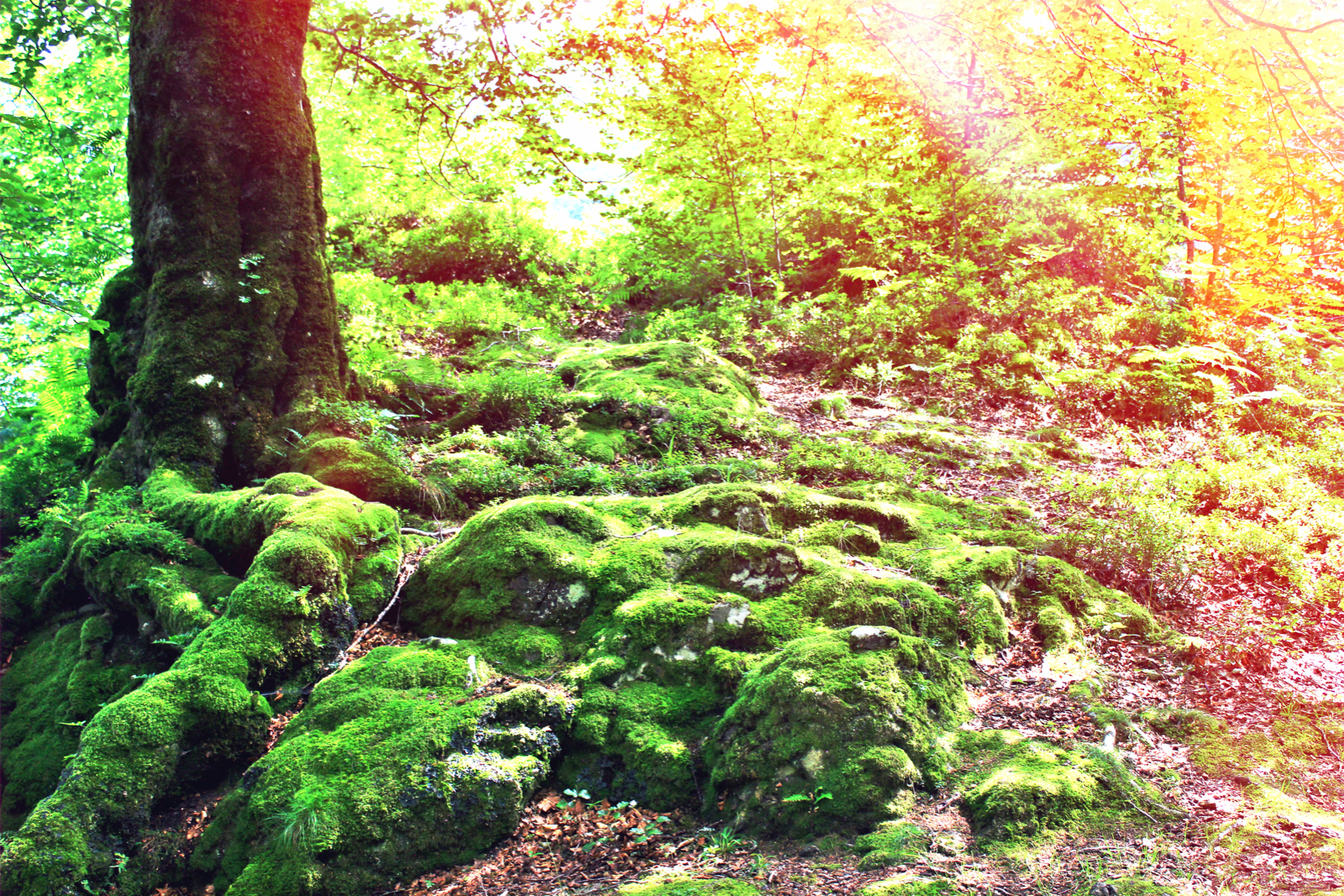 Tree and moss.jpeg