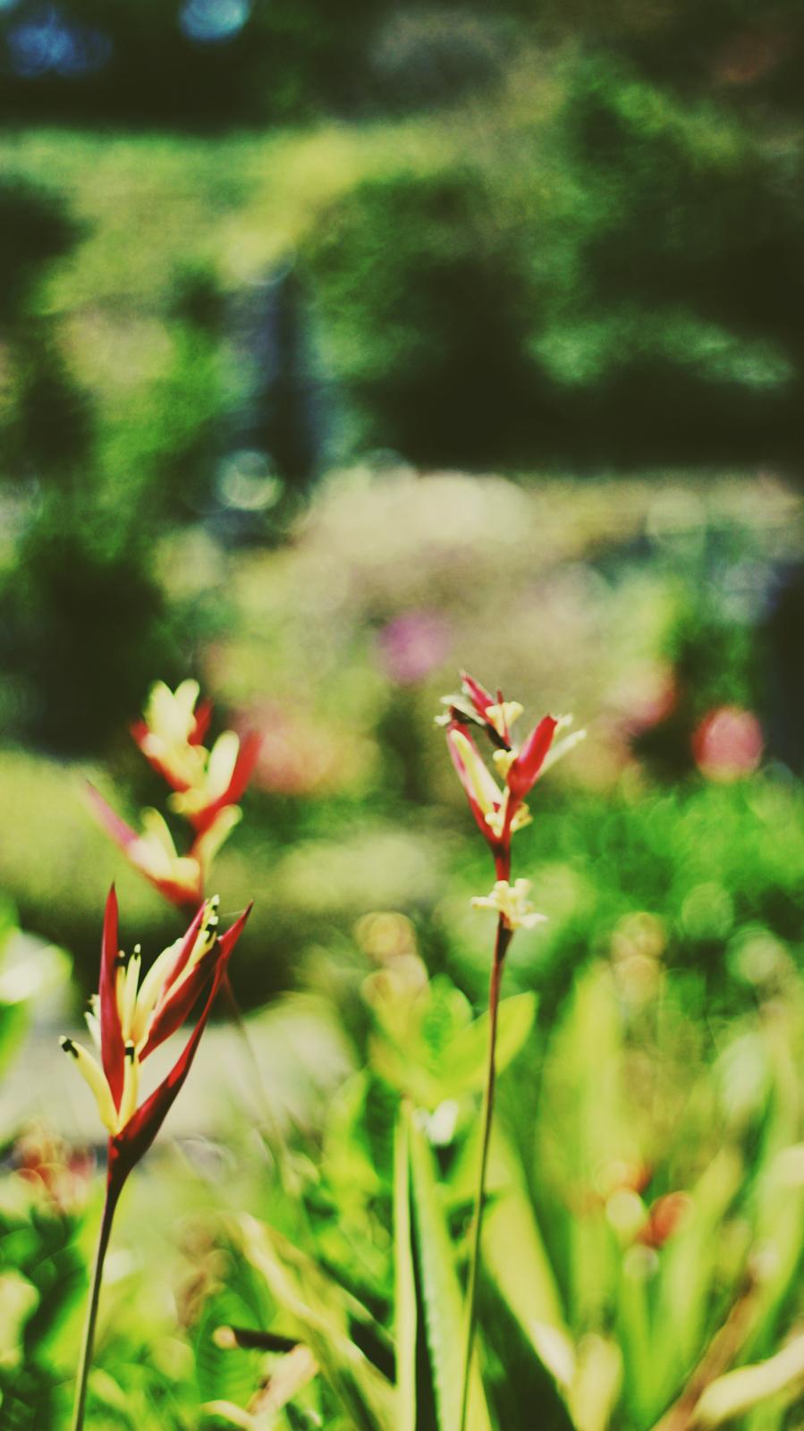 Red flower close up.jpeg