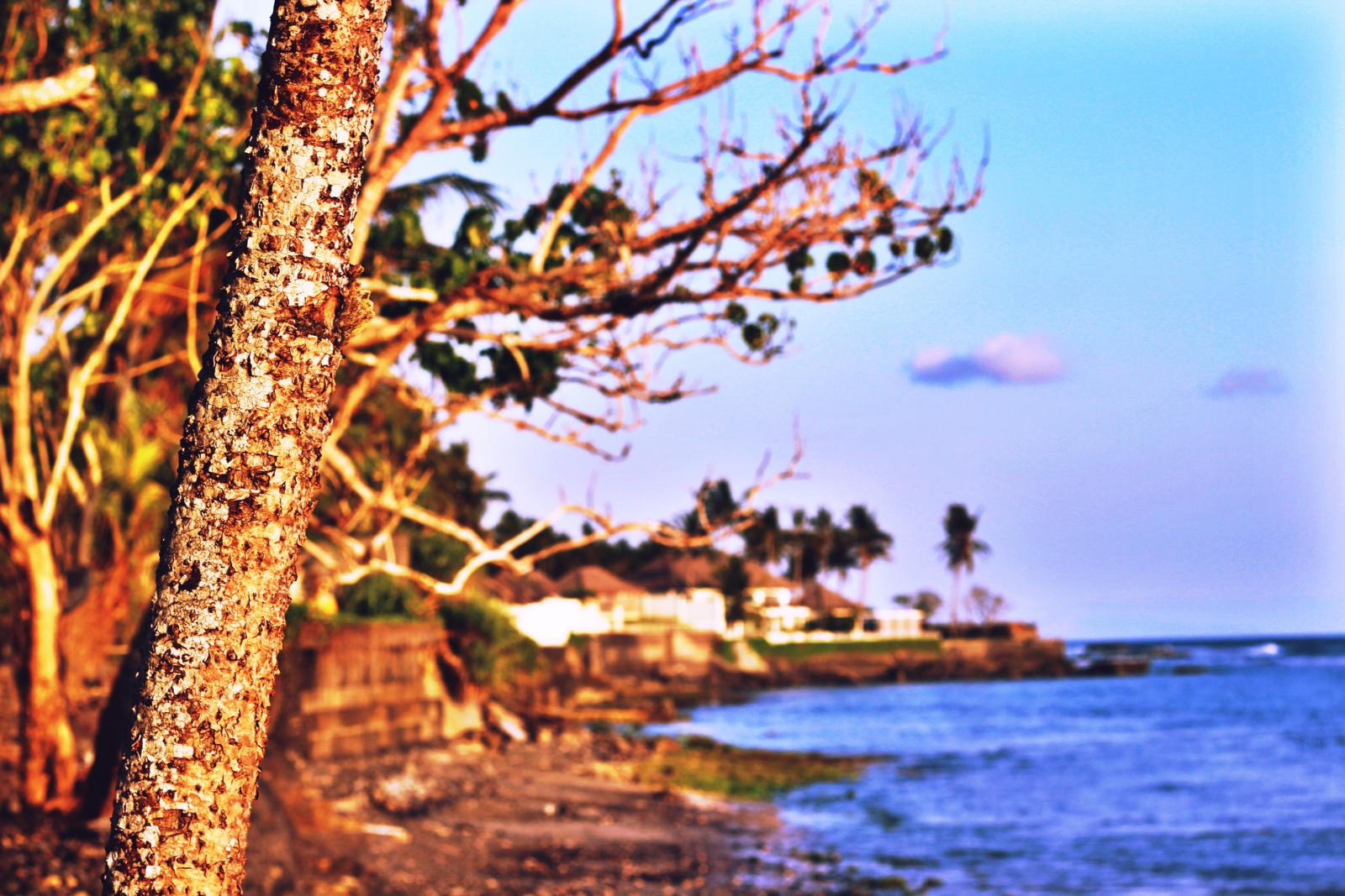 Tree sea scene.jpeg