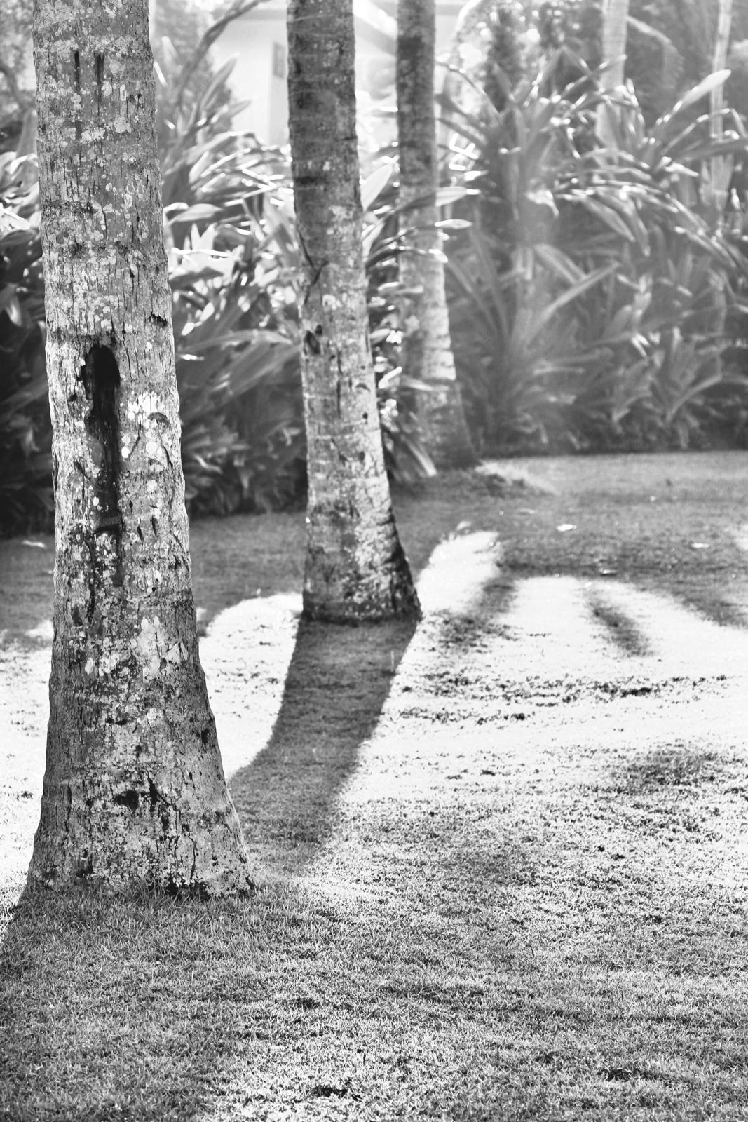 Black and white tree trunks.jpeg
