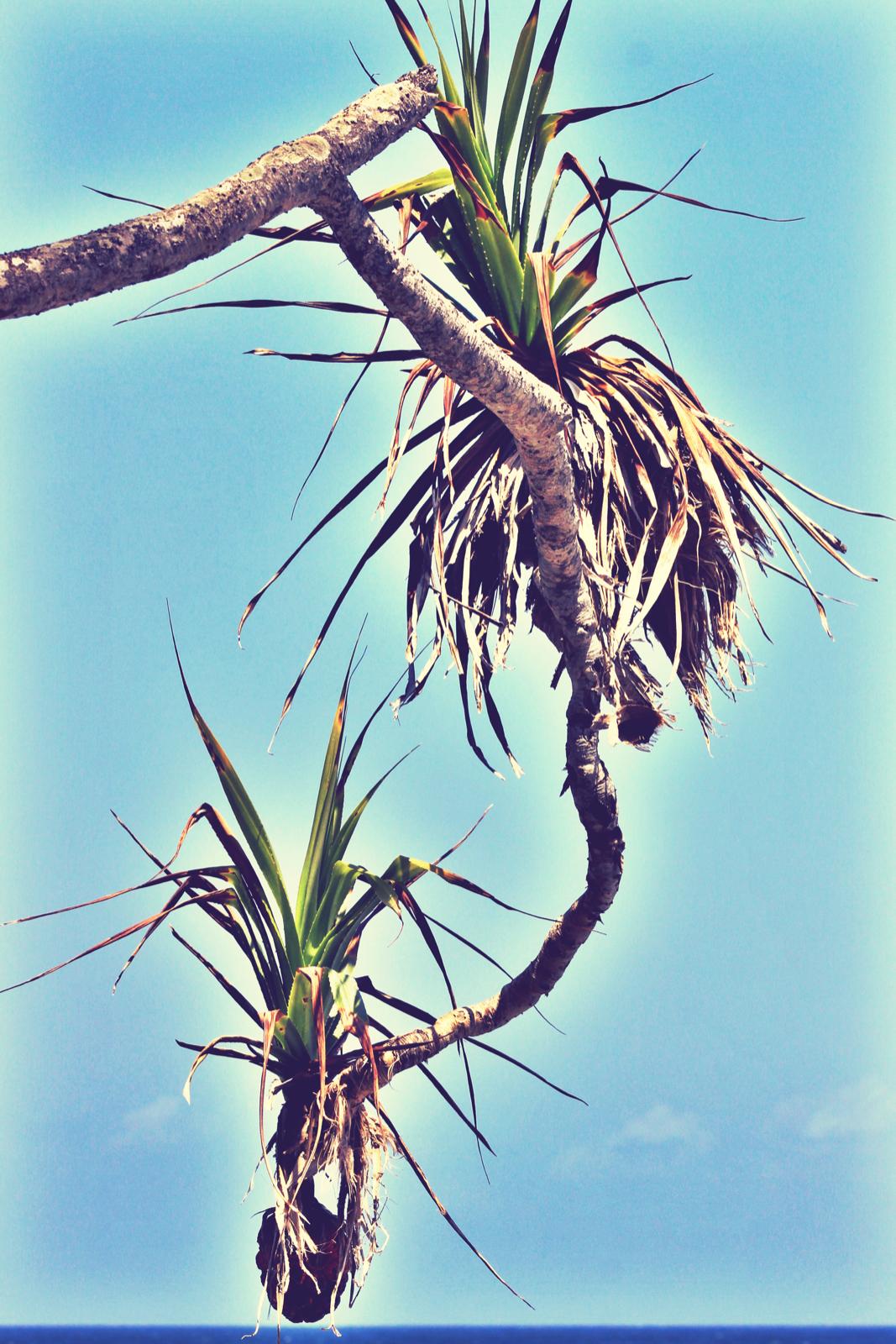 Hanging branch 3.jpeg