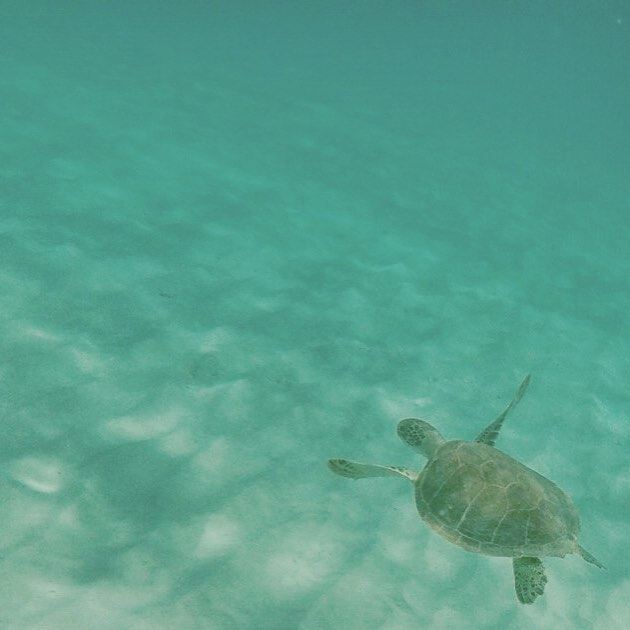 Seeing a sea turtle on my morning swim and snorkel was a real pinch myself moment when in the Caribbean this year. We must protect these dudes!