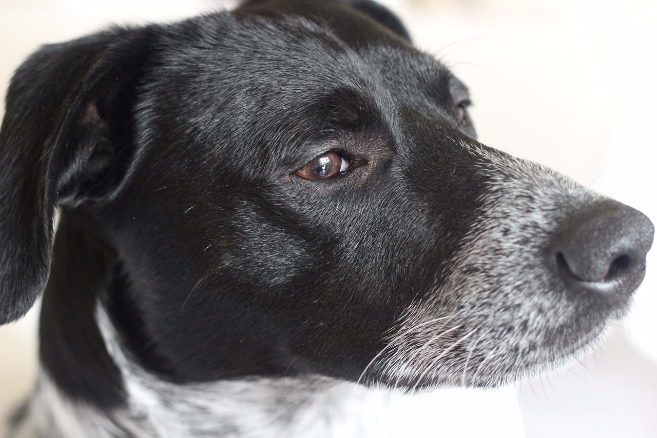 This is Harry. He is my handsome mongrel, rescue dog and best friend. You can follow his, and other doggy movements  here . Warning: only for the dog obsessed individual.