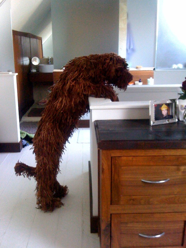 Web_hound_in_his_new_home__85525_zoom