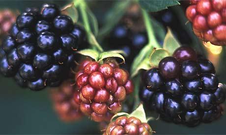 blackberries-1