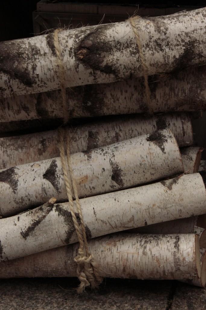 Birch logs in Boston