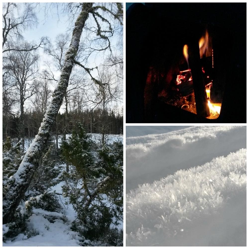 fire snow tree.jpg