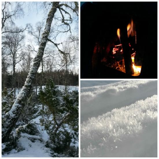 tree fire ice bothy 944 x944.jpg