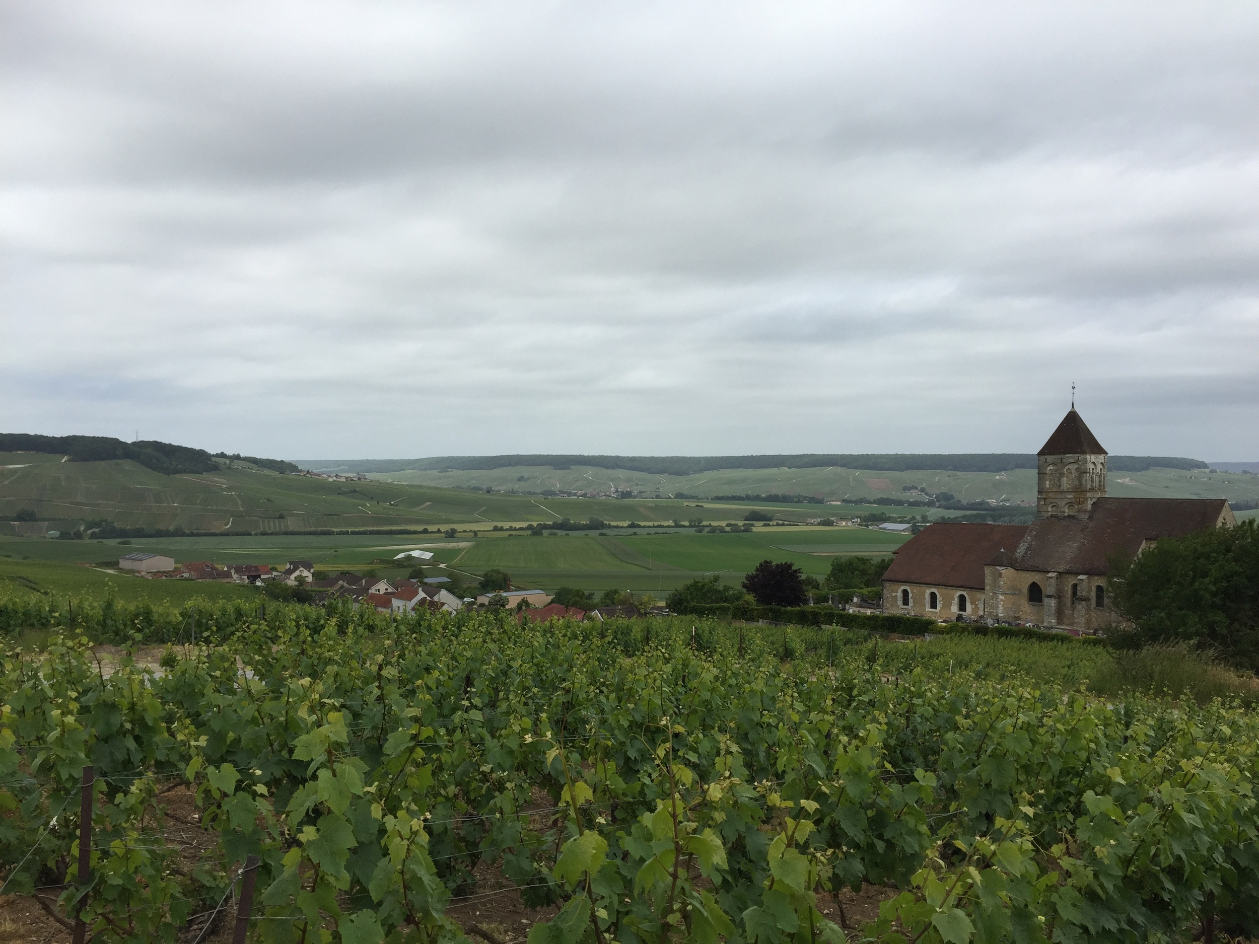 A view from the top of Cuis looking at the Coteaux Sud d'Epernay and the Vallée de la Marne