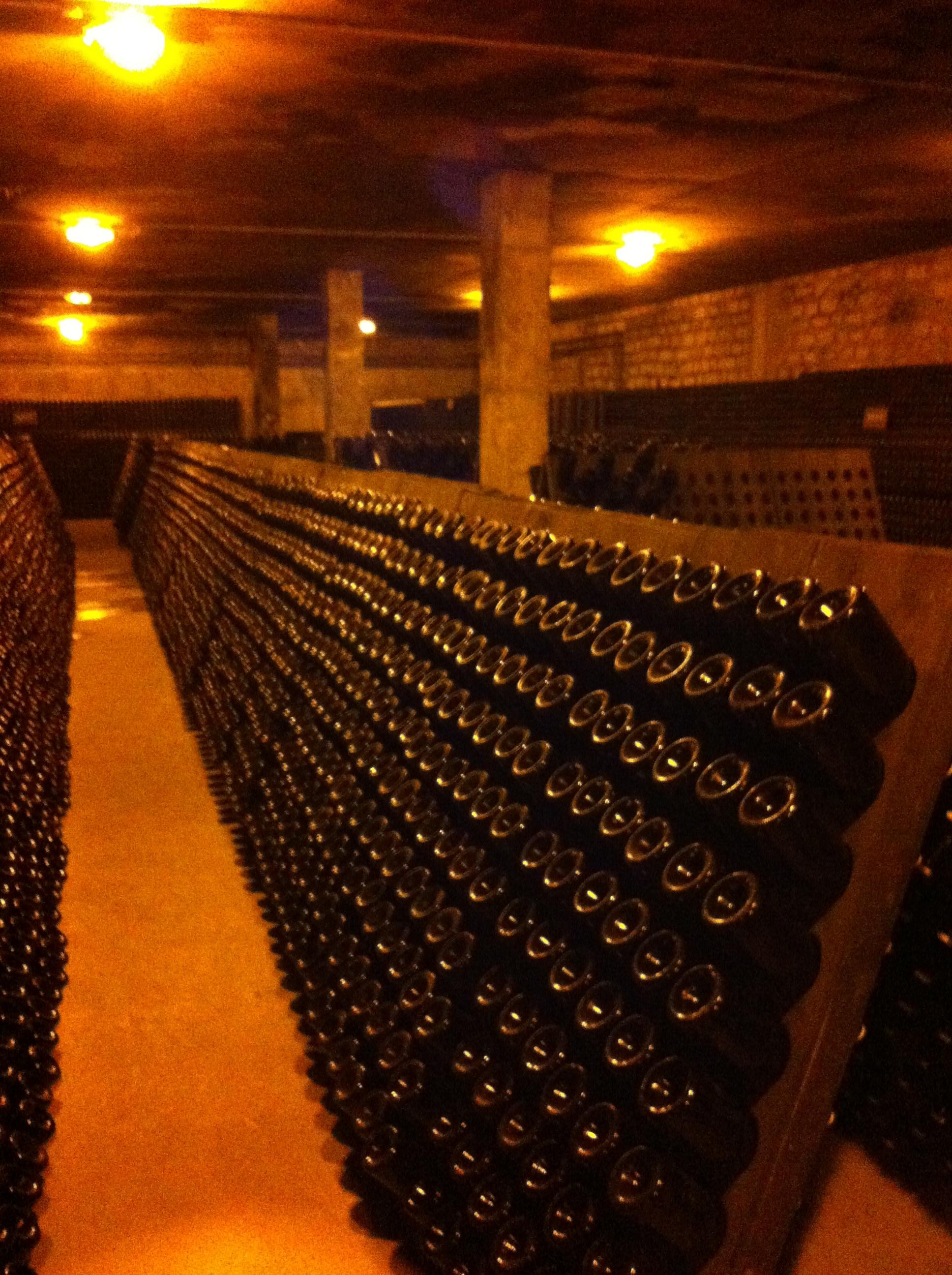 salon cellar 2.JPG