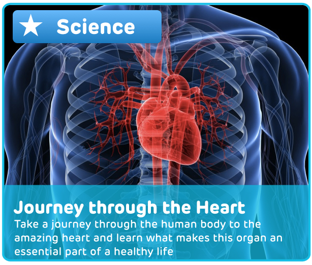 Human Heart Experience