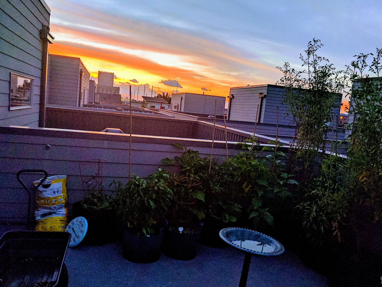 Twilight in the Garden of Good & Fertile.