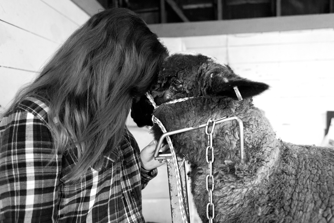 Girl with Sheep, 2014 | Columbia County Fair, NY