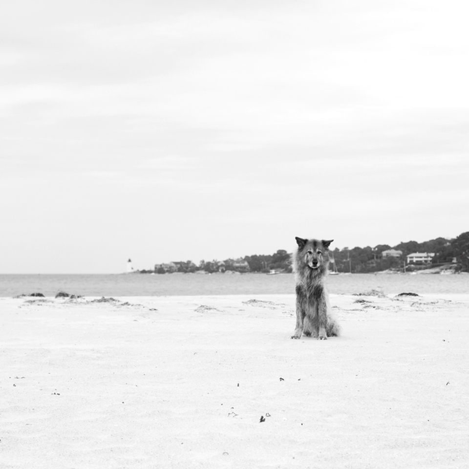 Dog, Wingaersheek Beach