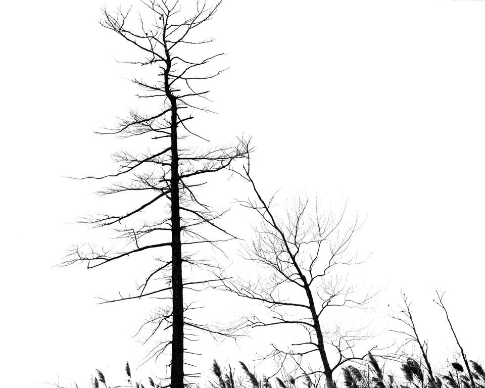 111514-trees-birds-5701.jpg