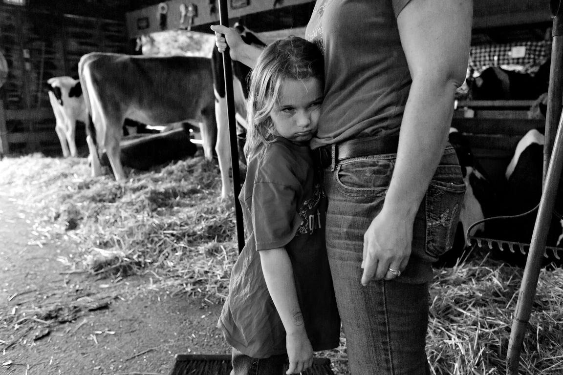Cow Barn - New York